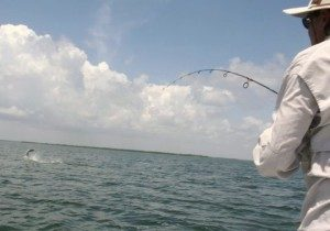 tarpon - fishing charters - Tavernier - backcountry