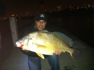 Golden Drum (In the Redfish Family)