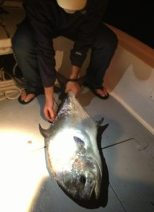 permit - Tavernier-backcountry - fishing charters
