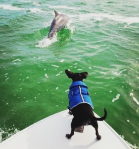 Dog with Dolphins