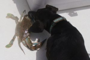 Dog with crab