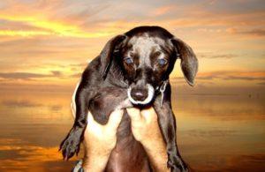 Dog and a Florida Keys sunset