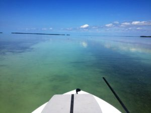 Backcountry - charters - fishing guides - Tavernier