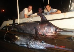 sword fish - night fishing - Tavernier - fishing guides