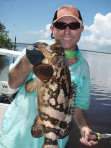 goliath grouper - backcountry - fishing guide - Flamingo