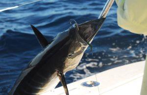Wahoo - Charter Fishing