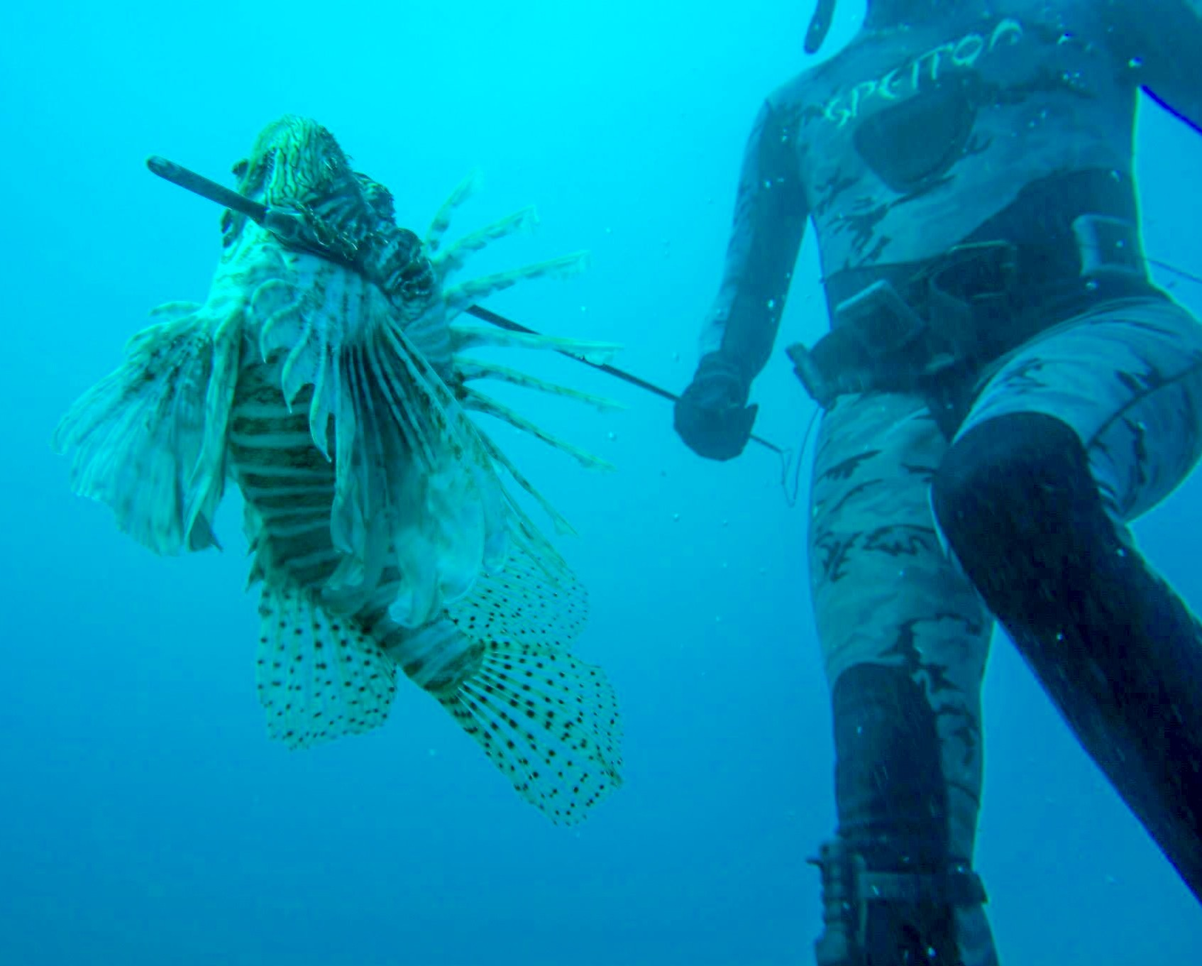The Dangerous and Invasive Yet Delicious Lionfish