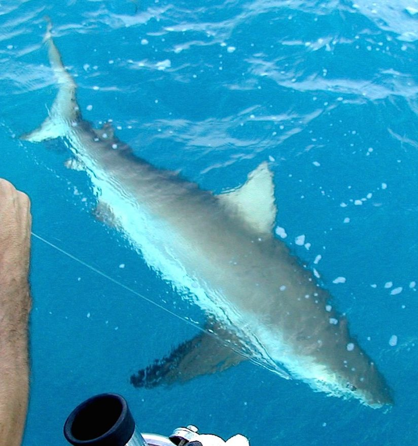 shark - diving - fishing - key largo - 2006