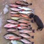 Catch - snapper - tavernier - reef fishing- 2009