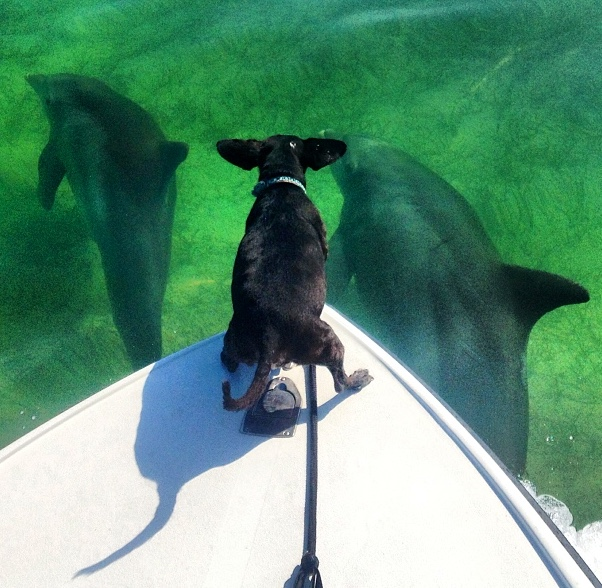 Dolphins - dogs - pets - key largo - boating - 2013