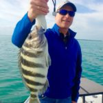 Trophy fish - tavernier - sheepshead- 2014